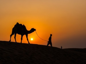 Camel at sunset in Thar Desert near Jaisalmer, Rajasthan, India