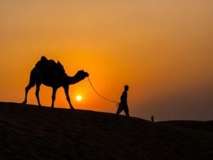 Camel at sunset in Thar Desert near Jaisalmer, Rajasthan, India