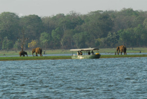 Kabini Maharaja nJlr-jungle