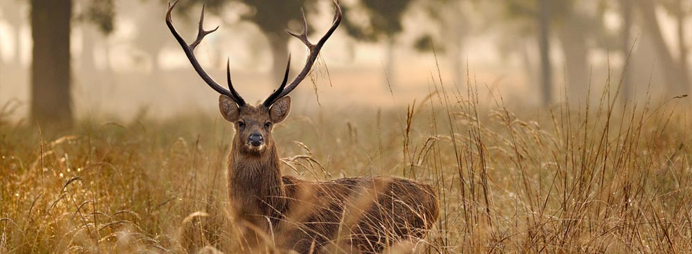 MP-kanha-national-park-4