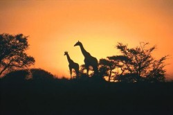 South Africa - s-a-sunset