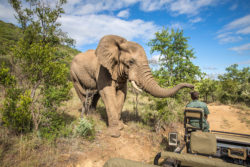 africa-best-game-reserves-kruger