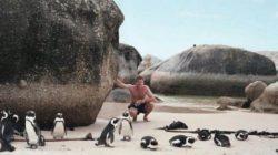 boulders-beach-cape-town