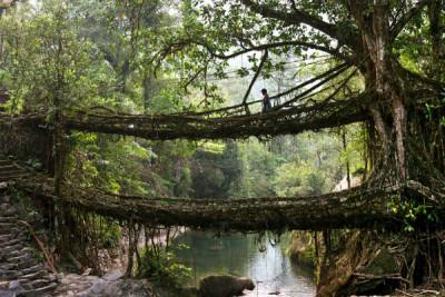 cherrapunji-bridge-at-meghalaya