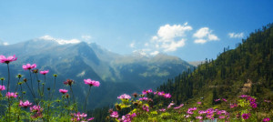 Bhutan_Moutnain_Flowers-2