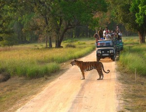 MP-Kanha_33_1407239531