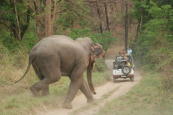 Asian_Elephant_at_Corbett_National_Park_10