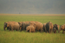 Corbett_National_Park