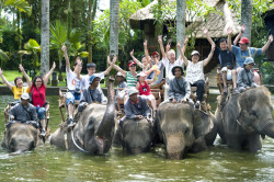 elephant-_safari-park_1