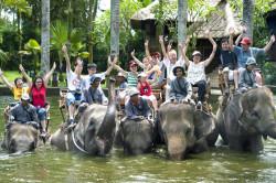 elephant-_safari-park_1