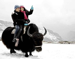 Shimla Yak-riding