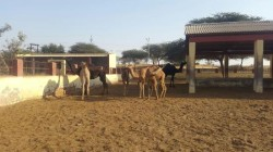 camel-research-centre