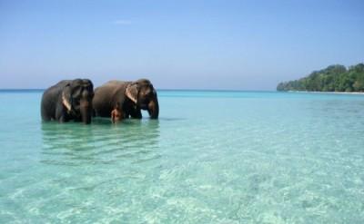 elephantbeach