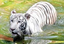 hyderabad-zoo-park