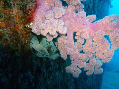 Mauritius-PADI-diving-coral-1024x768