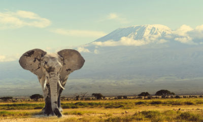 tanzania-safari-shutterstock_259144442